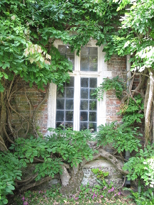 window_wisteria_portrait